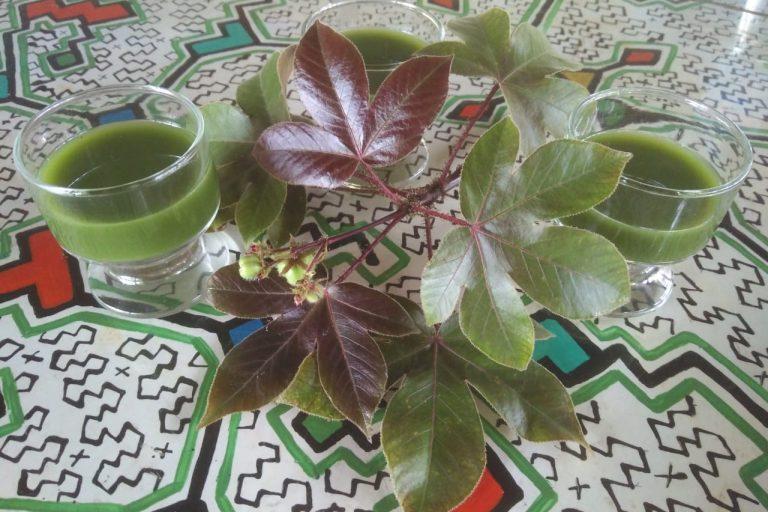 Shaman diet with Teacher Plants