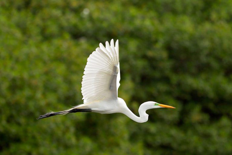 А у нас уже весна! Белые цапли вьют гнезда на озере Кашибокоча