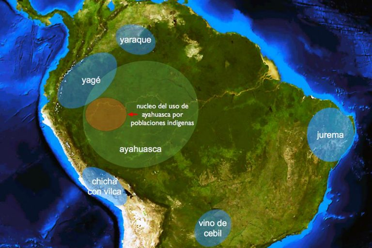 Ayahuasca – a mysterious combination of two plants